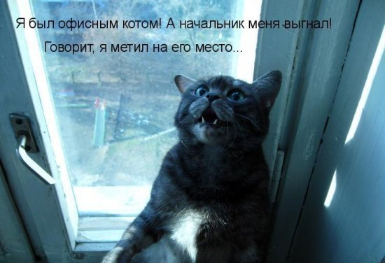 Порно дамы заказали мальчиков сауне россия фото 705-730