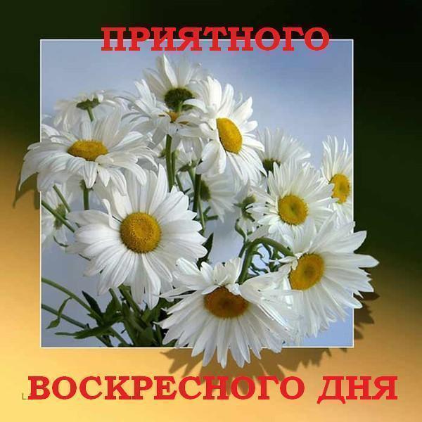 61133257_4a55282ed39b11 (600x600, 49 Kb)