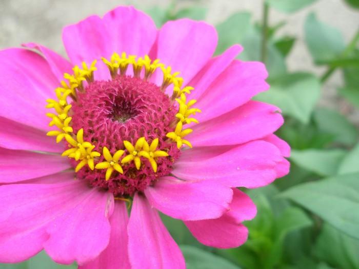 цветы сентября фото: