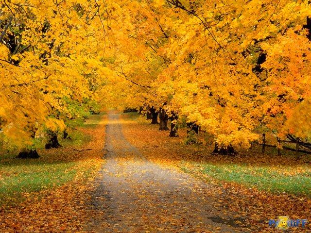 1283285191_1277602635_autumncoveredroad (640x480, 129 Kb)