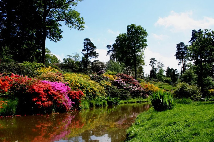 Сад Леонардсли - Leonardslee gardens 38042