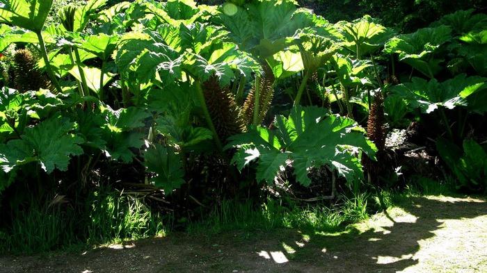 Сад Леонардсли - Leonardslee gardens 61515