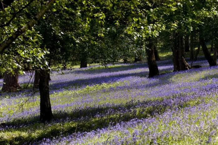 Сад Леонардсли - Leonardslee gardens 65215