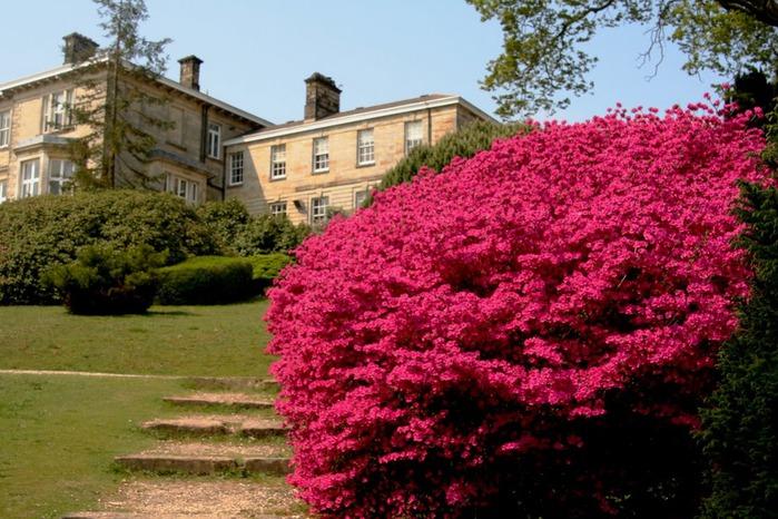 Сад Леонардсли - Leonardslee gardens 92626