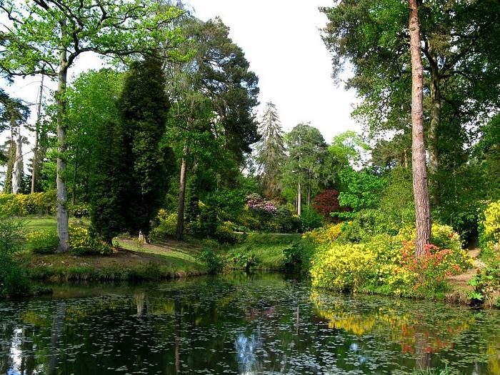 Сад Леонардсли - Leonardslee gardens 20584