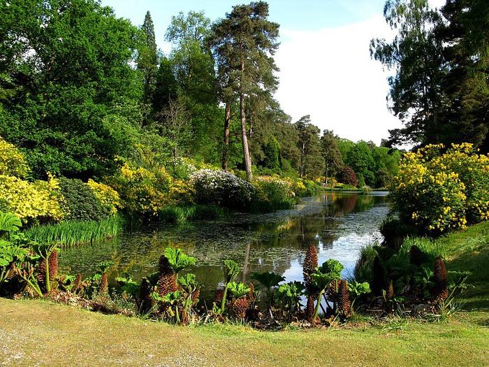 Сад Леонардсли - Leonardslee gardens 85775