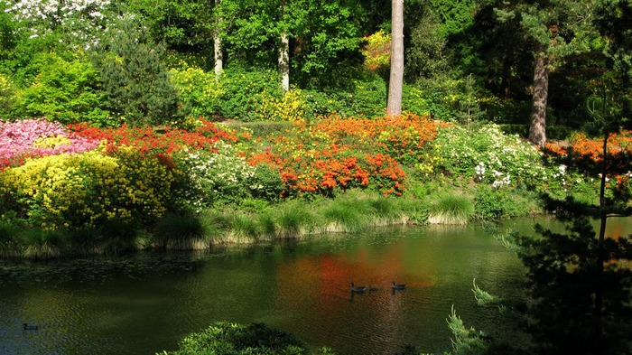 Сад Леонардсли - Leonardslee gardens 48394