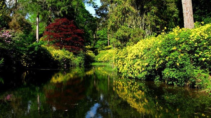 Сад Леонардсли - Leonardslee gardens 17032