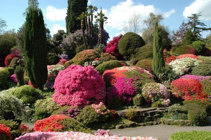 Сад Леонардсли - Leonardslee gardens 95649