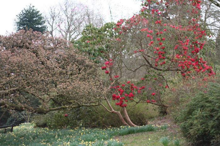 Сад Леонардсли - Leonardslee gardens 41830