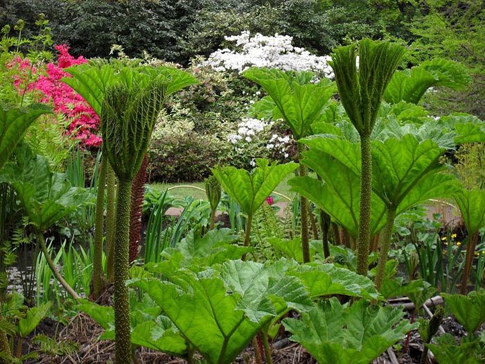 Сад Леонардсли - Leonardslee gardens 75844
