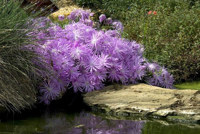 Сад Леонардсли - Leonardslee gardens 10577