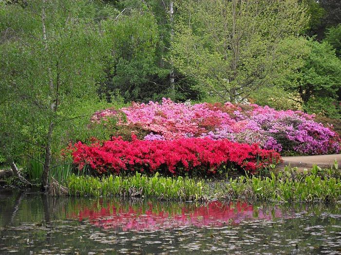 Сад Леонардсли - Leonardslee gardens 59917