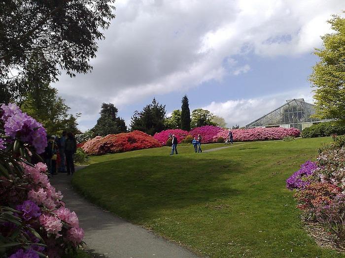 Сад Леонардсли - Leonardslee gardens 28362