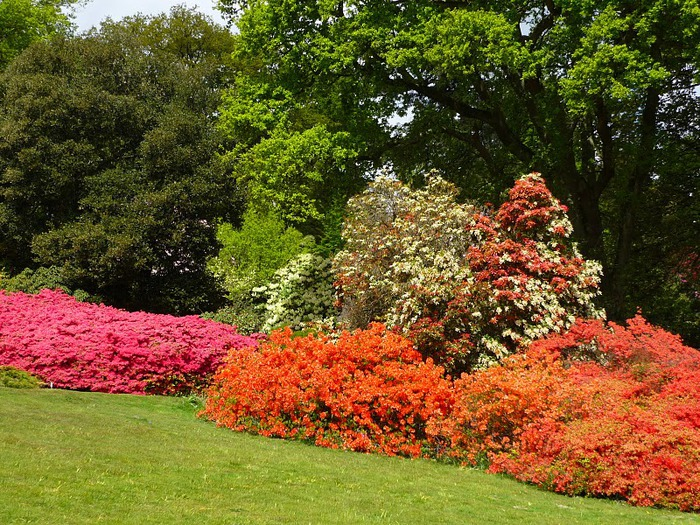 Сад Леонардсли - Leonardslee gardens 35314
