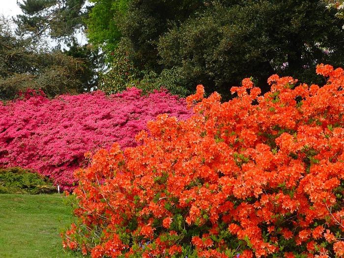 Сад Леонардсли - Leonardslee gardens 65101