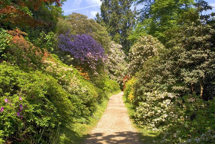 Сад Леонардсли - Leonardslee gardens 42865