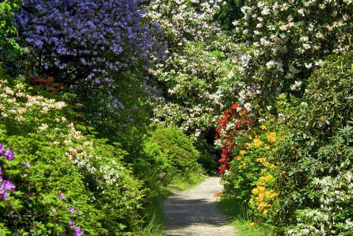 Сад Леонардсли - Leonardslee gardens 47165