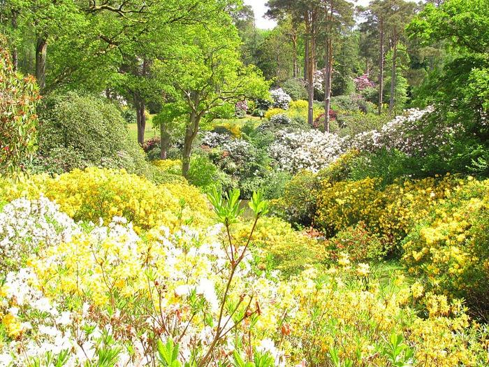 Сад Леонардсли - Leonardslee gardens 25734