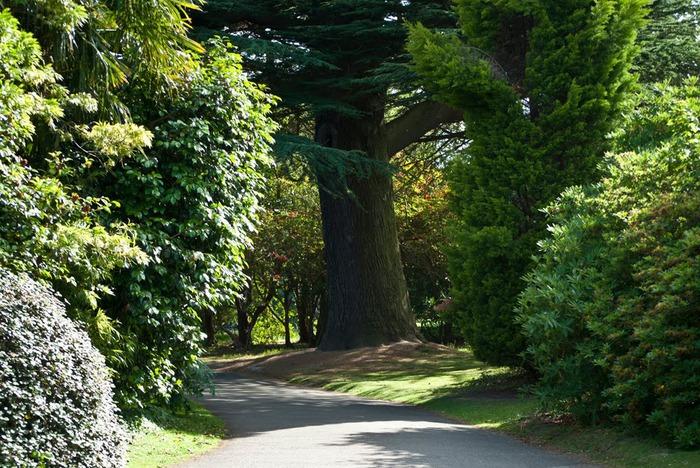 Сад Леонардсли - Leonardslee gardens 19355