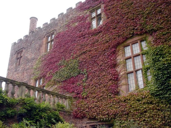 Замок Powis Castle, графство Поуис. 97223
