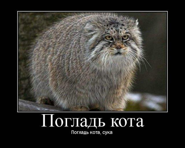 http://img0.liveinternet.ru/images/attach/c/1//63/759/63759232_274602_1236175980.jpg