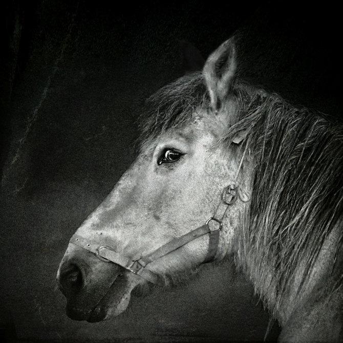 Фотограф Piet Flour 36