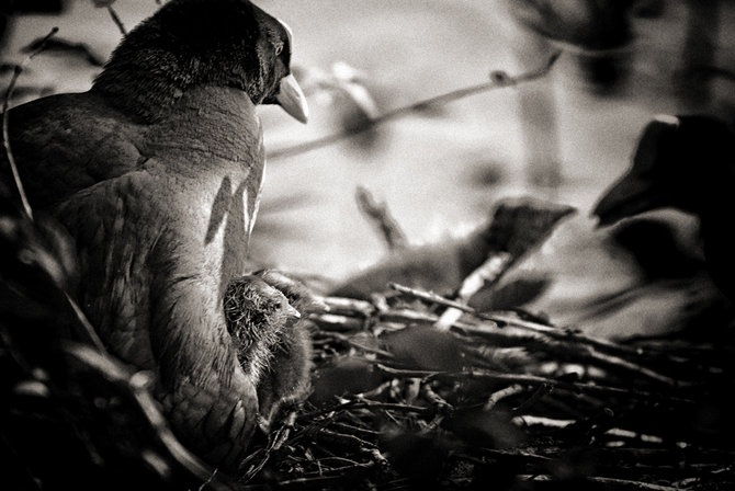 Фотограф Piet Flour 9