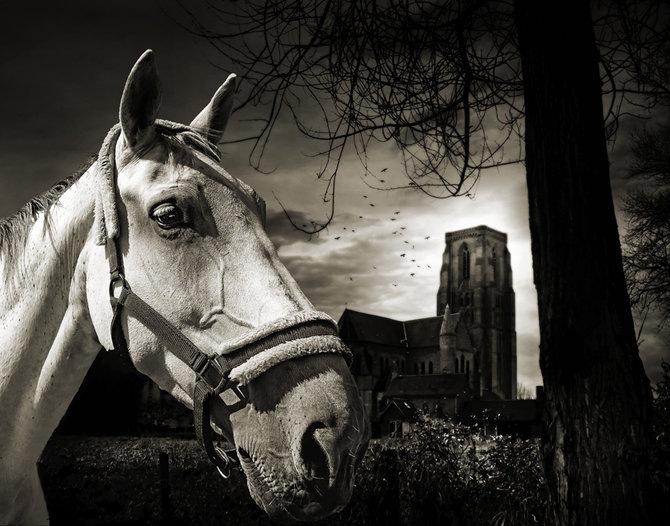 Фотограф Piet Flour 17