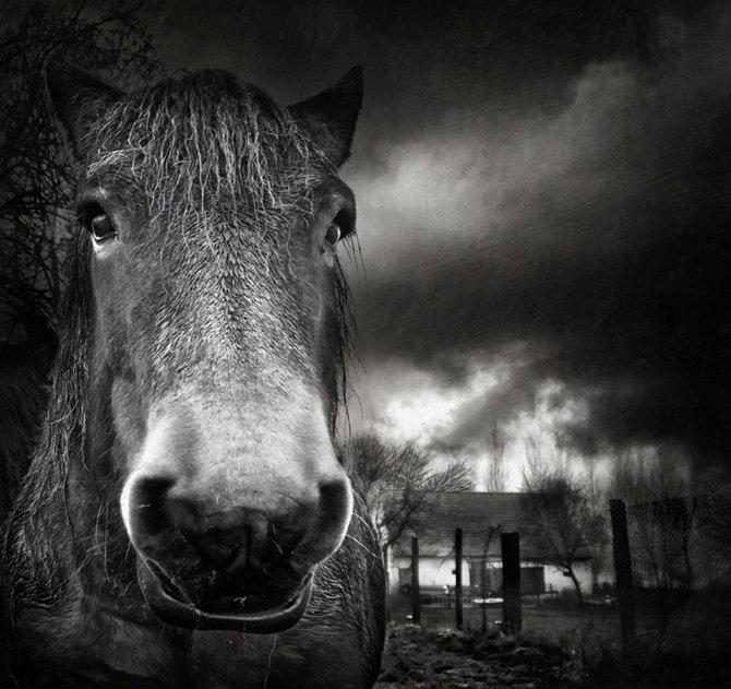 Фотограф Piet Flour 21