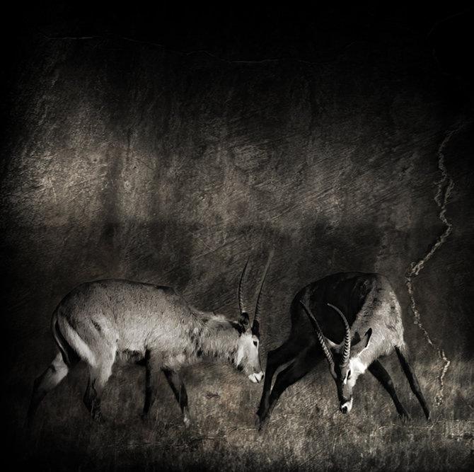 Фотограф Piet Flour 25
