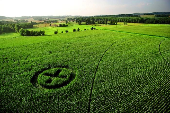 Китай увеличил экспорт ГМО кукурузы