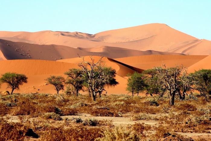 Намибия - страна двух пустынь 11831