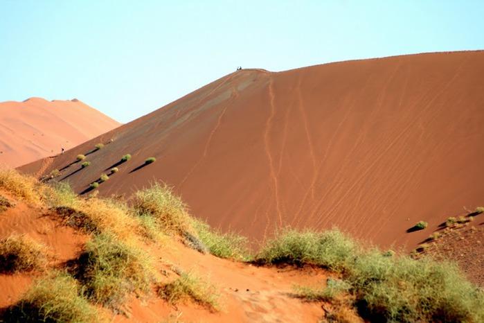 Намибия - страна двух пустынь 19866