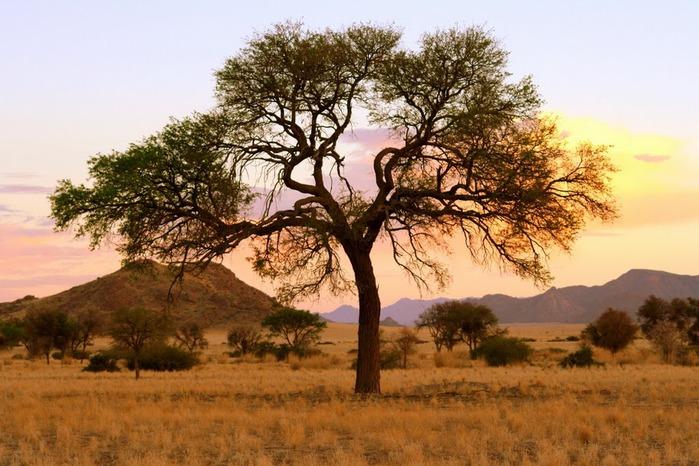 Намибия - страна двух пустынь 30791