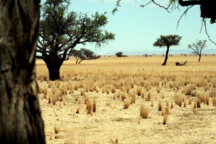 Намибия - страна двух пустынь 85313