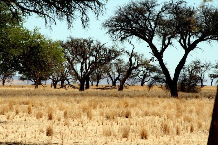 Намибия - страна двух пустынь 52695