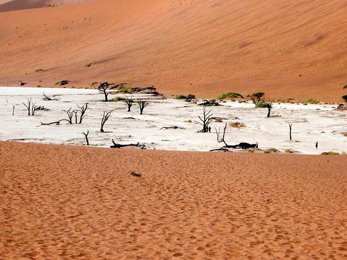 Намибия - страна двух пустынь 22946