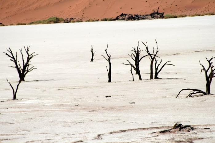 Намибия - страна двух пустынь 92307