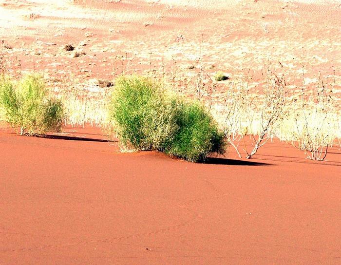 Намибия - страна двух пустынь 66534