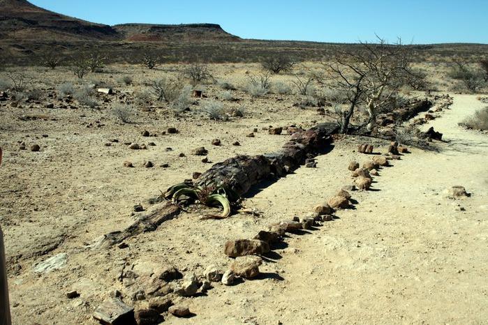 Намибия - страна двух пустынь 71002