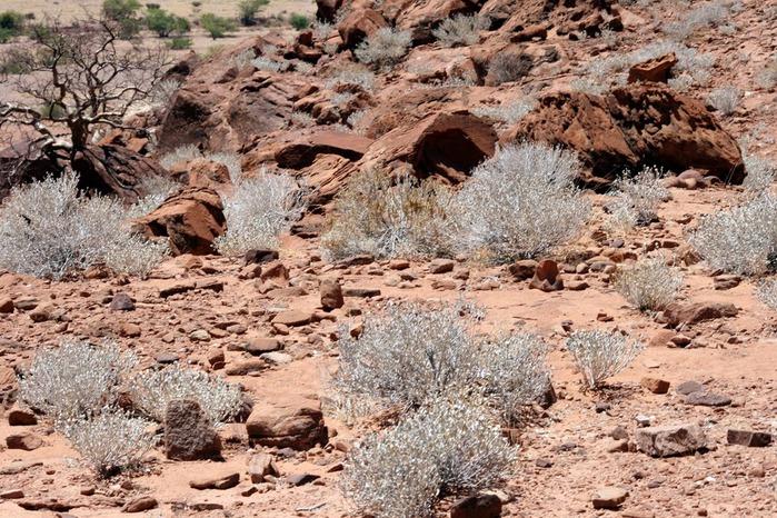 Намибия - страна двух пустынь 34189