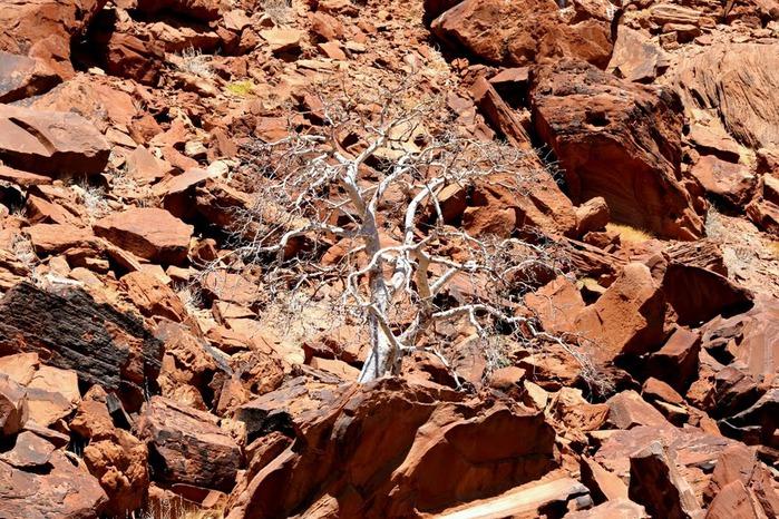 Намибия - страна двух пустынь 83641