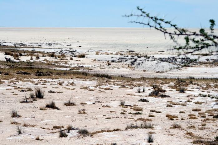 Намибия - страна двух пустынь 76985