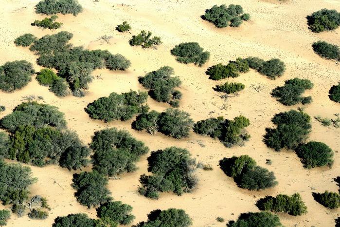Намибия - страна двух пустынь 66111