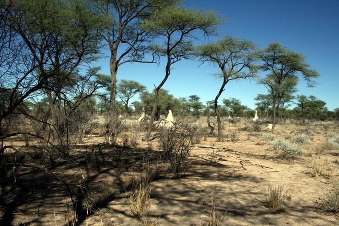 Намибия - страна двух пустынь 93299