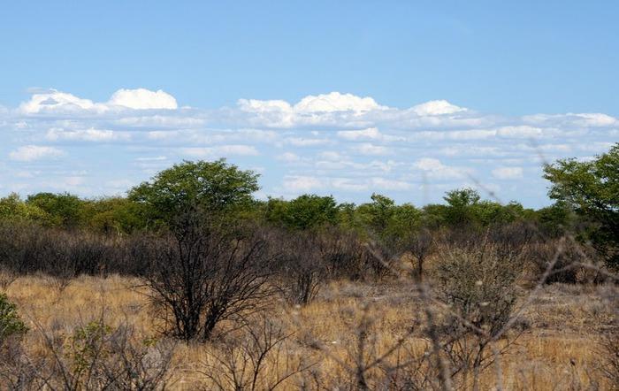 Намибия - страна двух пустынь 44458
