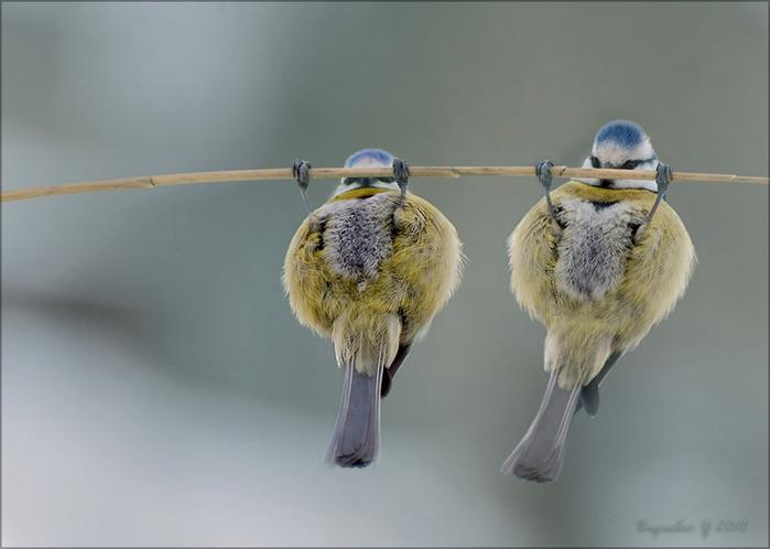птицы фото смешные