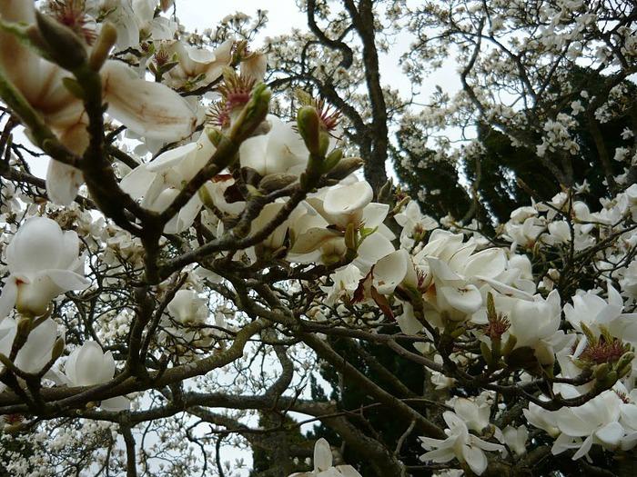 образцовый сад – волшебный Bodnant Garden 53181
