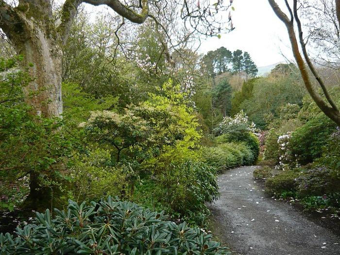 образцовый сад – волшебный Bodnant Garden 33228